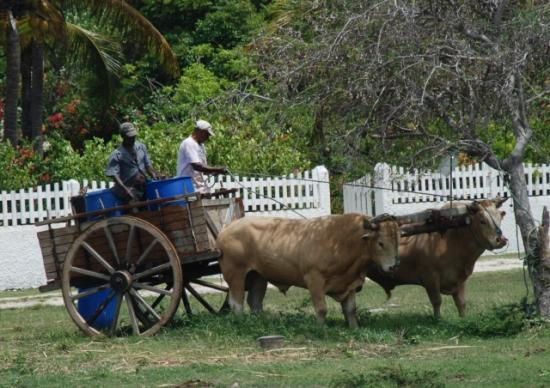 charrue gwada