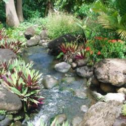 jardin botannique guadloupe